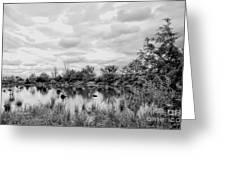 Mill Creek Marsh Serenity Greeting Card