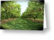 Millions Of Peaches Greeting Card