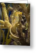 Mimic Seahorse Greeting Card