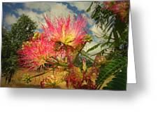 Mimosa Blossoms Greeting Card