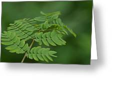 Mimosa Greens Greeting Card