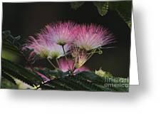Mimosa Greeting Card