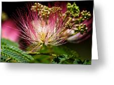 Mimosa- The Beautiful Bloom Greeting Card