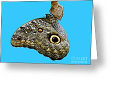 Mindo Butterfly Greeting Card by Al Bourassa