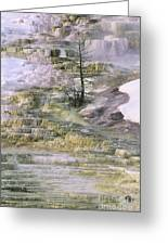 Minerva Springs Terraces Yellowstone National Park Greeting Card
