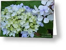 Mini Blue Hydrangea Greeting Card