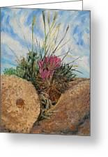 Mini Cactus Garden In Rock Greeting Card