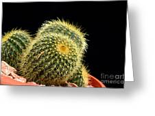 Mini Cactus In A Pot Greeting Card