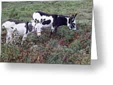 Mini Donkeys Greeting Card
