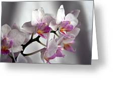 Mini Orchids 1 Greeting Card