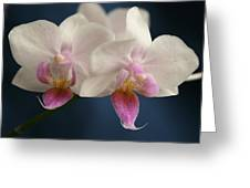 Mini Orchids 2 Greeting Card