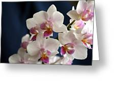 Mini Orchids 3 Greeting Card