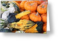 Mini Pumpkins And Gourds Greeting Card