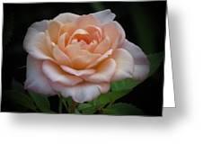 Mini Rose Greeting Card