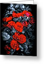 Mini Roses On Walk Greeting Card