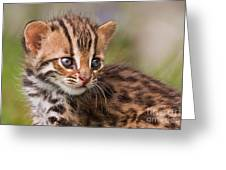 Miniature Leopard Greeting Card by Ashley Vincent