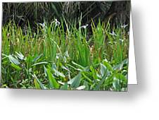 Miniature Lilies Greeting Card