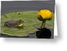 Mink Frog On Lilypad  Greeting Card