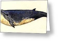 Minke Whale Greeting Card