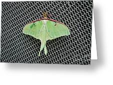 Mint Green Luna Moth Greeting Card