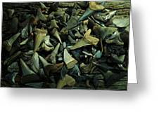 Miocene Fossil Shark Tooth Assortment Greeting Card