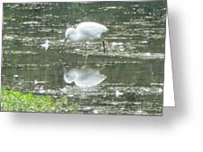 Mirror Image Of The Snowy Egret Greeting Card