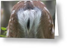 Mirror Of A Deer Hochwildpark Rhineland Kommern Mechernich Germany Greeting Card