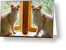 Mirrored Cats Greeting Card