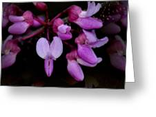Mirrored Redbuds Greeting Card