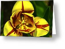 Mirrored Tulip Time Greeting Card