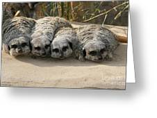 Mischievous Meerkats Greeting Card