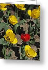 Misplaced Tulip   #0934 Greeting Card