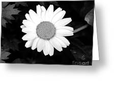 Miss Daisy Greeting Card