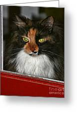 Miss Gizzie Waits By Diana Sainz Greeting Card