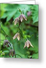 Mission Bells  Fritillaria  Grow Greeting Card