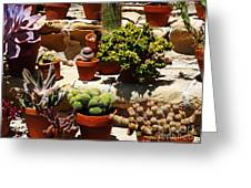 Mission Cactus Garden Greeting Card