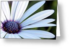 Mission Flower 4480 Greeting Card