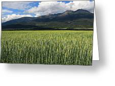 Mission Valley Wheat Greeting Card