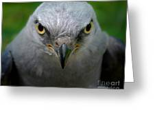 Mississippi Kite Stare Greeting Card