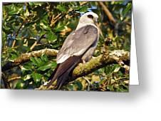 Mississippi Kite Greeting Card