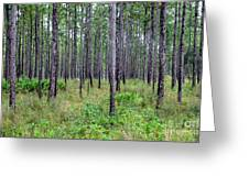 Mississippi Woods Greeting Card
