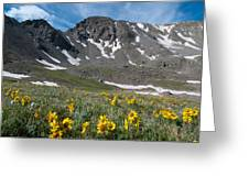 Missouri Mountain And Wildflower Landscape Greeting Card