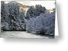 Mist And Snow On Trees Greeting Card
