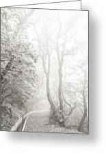 Mist In Madeira Greeting Card