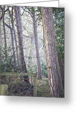 Mist Through The Trees Greeting Card