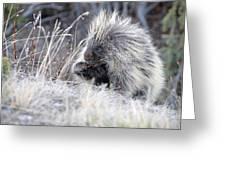 Mister Porcupine - Denali Alaska Greeting Card