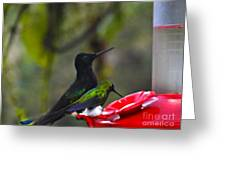 Mister Santa Pants    Mindo Hummingbird Greeting Card by Al Bourassa