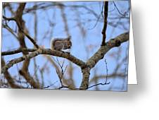 Mister Squirrel Greeting Card