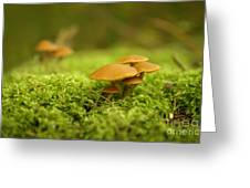 Mistery Mushrooms Greeting Card