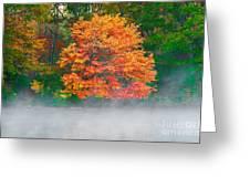 Misty Fall Tree Greeting Card